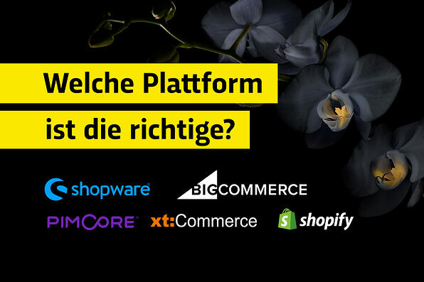 Which e-commerce platform or online store is the fitting one?